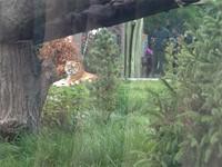 8th Grade PBIS Zoo Trip 16-17