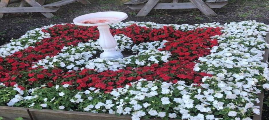 Elmwood Student Garden